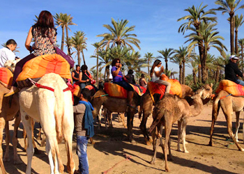 Half-Day Sunset Camel Ride In The Palm Grove Of Marrakech